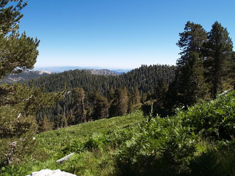 View from Wellman Cienega