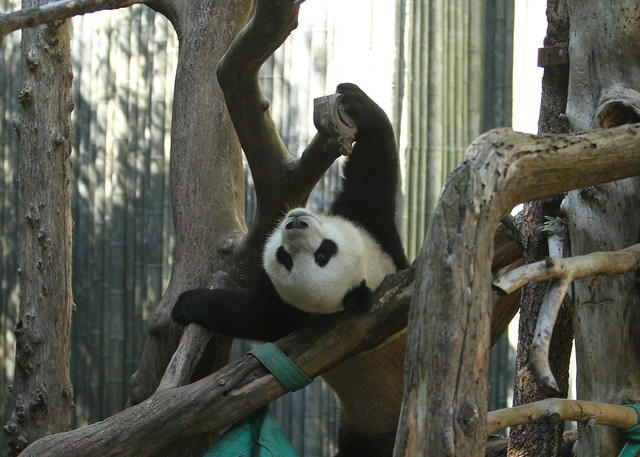 Yun Zi hanging out in the tree