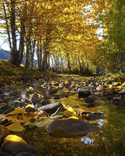 autumn fall yellow creek gold hailey idaho edminsterphotography