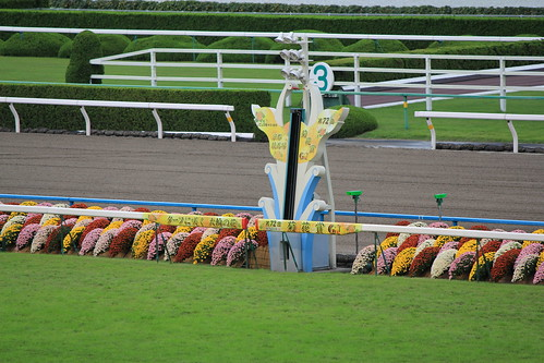 2011 菊花賞
