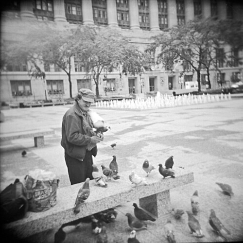 Man and Pigeons 1