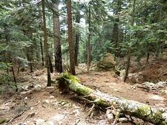 Descente directe par le ruisseau de Fumicosa : la trace dans la forêt