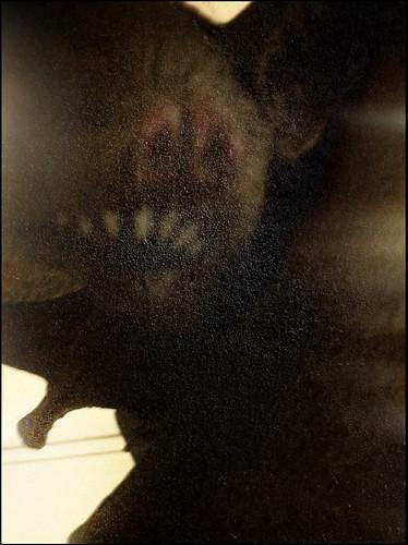 Halloween Bat by Juli Kearns (Idyllopus)