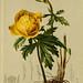 Atlas der Alpenflora v.1