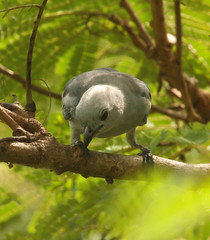 Guyana-0902