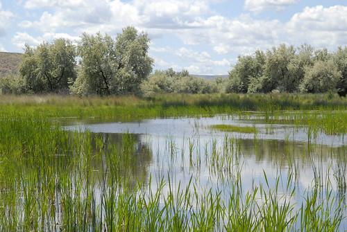 美國農業部WRP計畫復育成功的溼地(美國農業部提供)