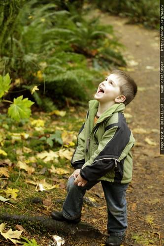autumn foliage leaf walk in tryon creek state park    MG 1863