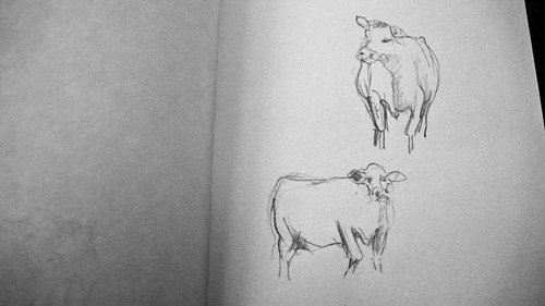 Cow. Drawing.