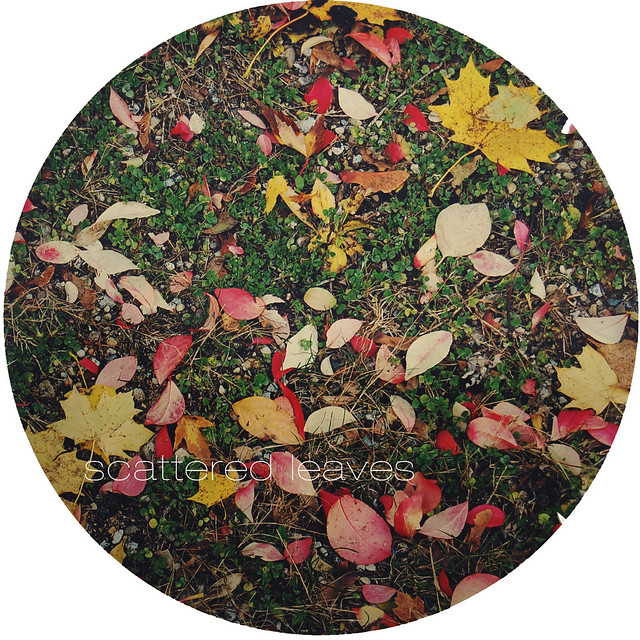 leaves_in back_7