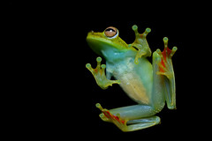 [Free Images] Animals 2, Amphibian, Frogs ID:201111260400