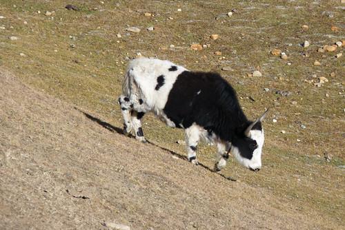 Tibet 422