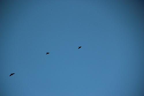 three in the sky