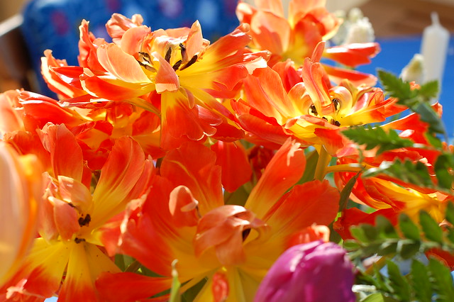 Photography is happiness: Here's a Fire in the tulip bouquet by iHanna