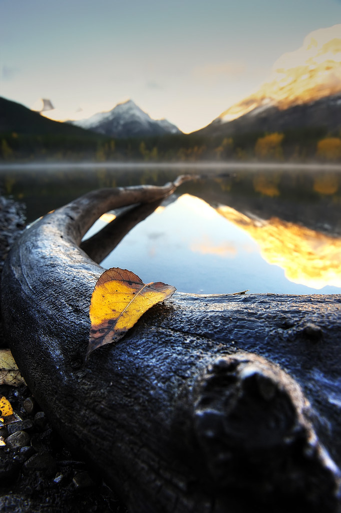 fallen leaf in front of wedge pond