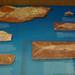 Fish fossil por OtroPX