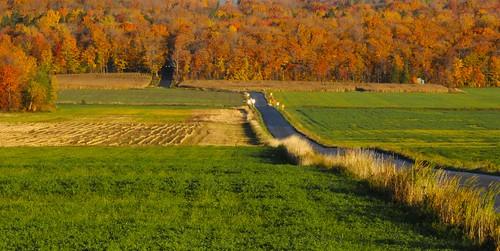 road canada fall automne champs foliage route fields athousandwords feuillage québec iledorléans