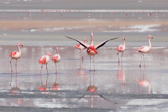 Laguna Colorada, Reserva Nacional de Fauna Andina Eduardo Avaroa, Bolivia
