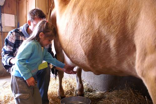 Ashlynn milking the cow.