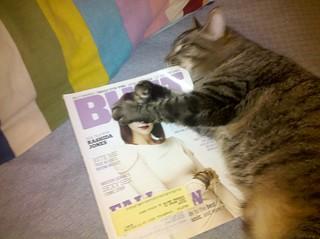 Feminist Cat
