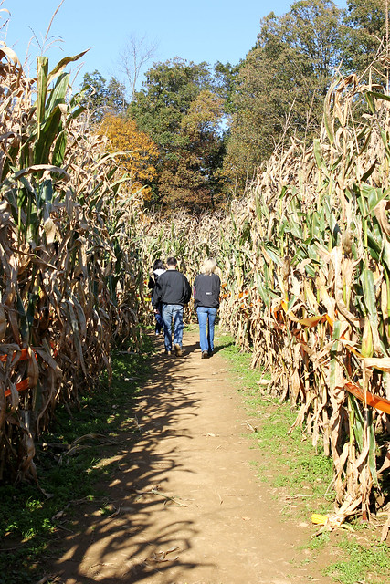 More Maze...Or is that Maize?