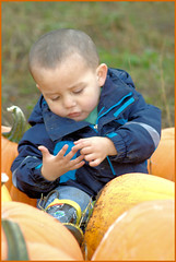 Christopher counting his pumpkins