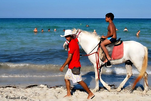 travel horses people beach tunisia djerba masterpiece makelovenotwar afryka elisabethgaj 100commentgroup soweltaken