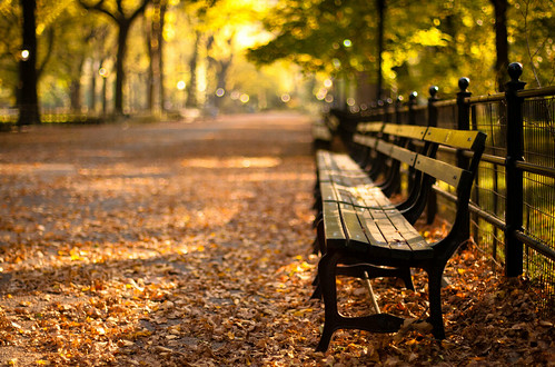 park autumn sunset newyork fall bench centralpark ruby5