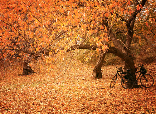 For Two - Autumn- Central Park - New York City