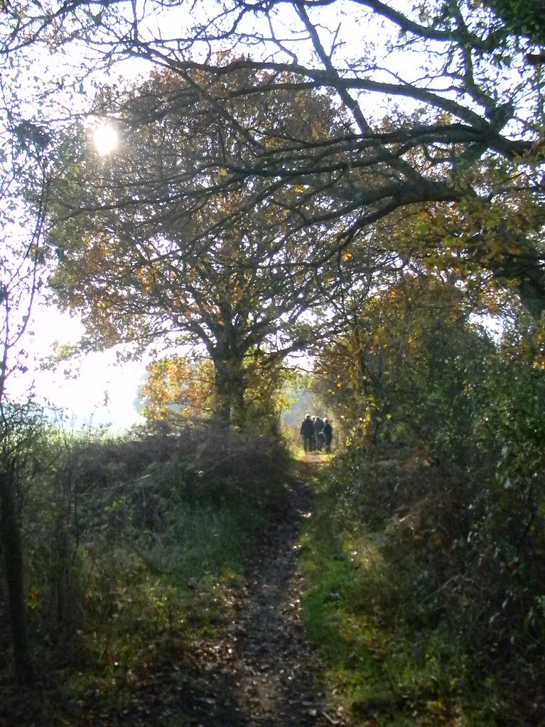Tree, path New Addington to Hayes