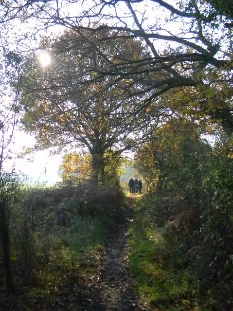 Tree, path