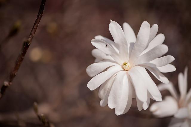 027 flower