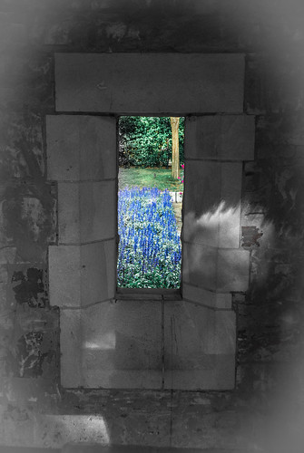 Voilets Through a Window