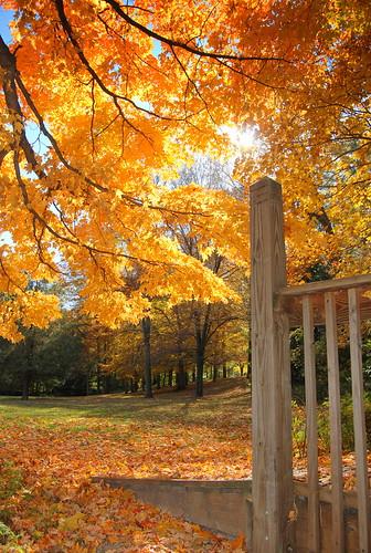 fall2011 waymorrpark