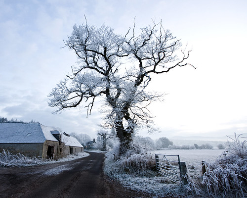 Bruiach Winter Song. Christmas cards now available
