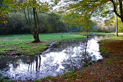 La marre en amont des étangs -The small pond upstream of the ponds (Soignes forest -Brussels)