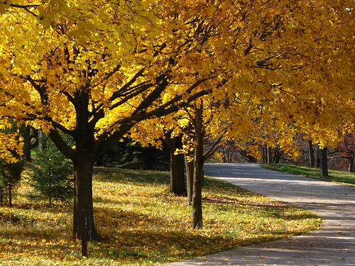 road trees color yellow wisconsin pines maples mukwonago colorphotoaward mukwonagocountypark