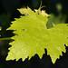 Gers 08-2011 0113.jpg by darkfloyd60