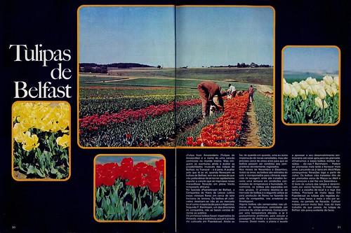 Panorama, nº8, Junho 1975 - 28