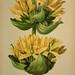 Atlas de la flora alpine 4.