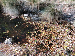 stagno di villa giulia a novembre