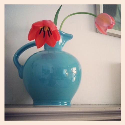 Fiesta Tulips