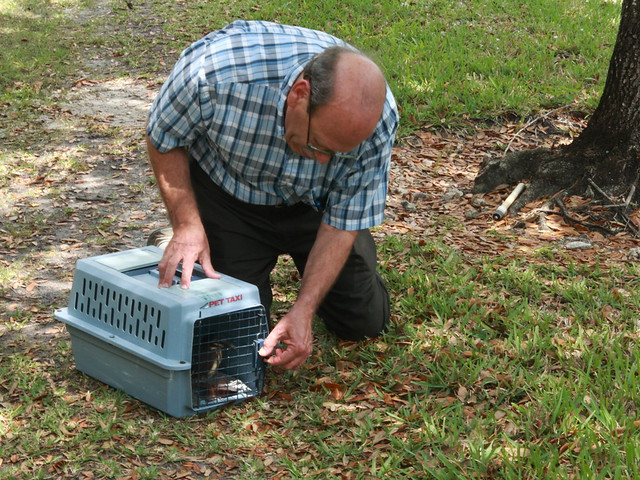 Steve releases Green Heron 20120327