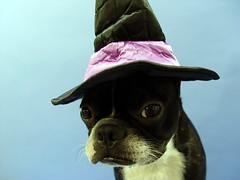 """Oct 07 2011 [Day 342] """"Test Shot New Witch's Hat"""""""