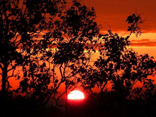 uk morning trees beautiful up silhouette sunrise golden early glow yorkshire wentworth glorious sunburst coming rise thorpehesley nuframe