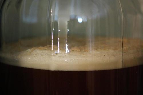 Beer Fermentation (3.5 Hours)