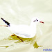 2007_02_10 - 14_57_19.jpg