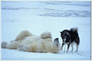 Polar Bear Hugs Dog (6 of 6)