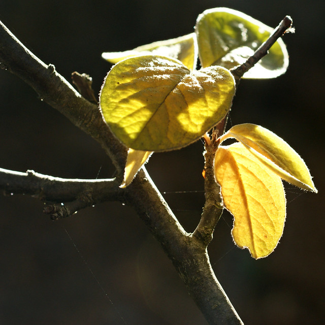 l automne tisse sa toile flickr photo