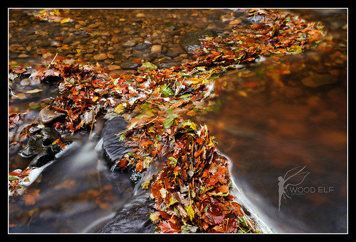 Leaves and Water Flow