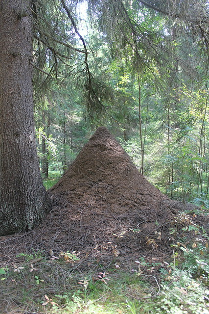 Giant Finnish Ant Hill